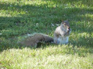 Squirrel Up