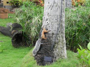 Tropical Squirrel 7
