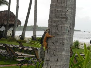 Tropical Squirrel 8