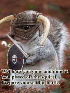 squirrel knight