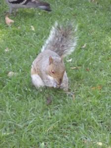 SA Squirrel Demon