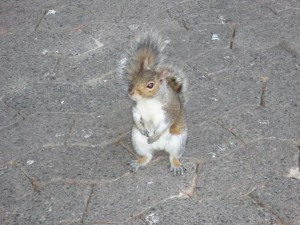 SA Squirrel Standing