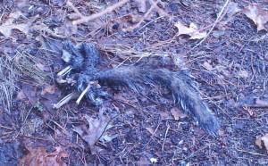 Squirrel Bones