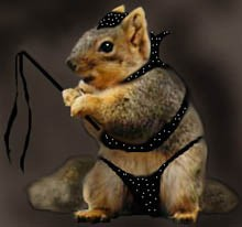 BDSM Squirrel